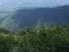 Tree-line On Monte Falterona