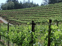 Napa Valley Wine Capital of India