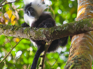 Best of Rwanda Safari Photos