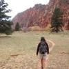Open Bottom Canyon - Zion - Utah - USA
