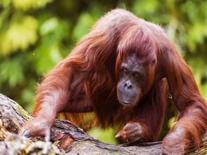 4 Days And 3 Nights Orangutan Camping Trip (GOT4) Photos