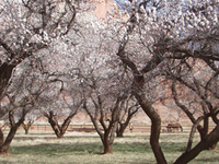 Orchards At Capitol Reef National Park