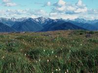 Olympic Wilderness