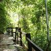 Guatopo National Park