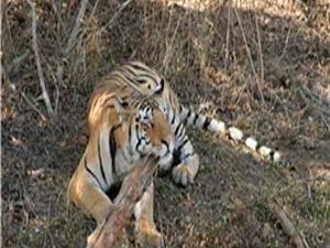Phen Wildlife Sanctuary