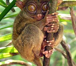 Philippine Tarsier &  Wildlife Sanctuary