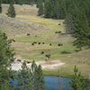 Pleasant Valley - Yellowstone - USA