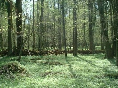 Bialowieza National Park