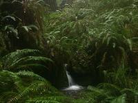 Prairie Creek Redwoods State Park