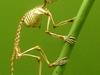 Primate Skeleton - Museum Of Natural History