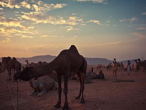 11 Days Rajasthan - Pushkar Fair Tour Photos