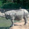 Rhino At Assam State Zoo
