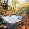 Ricketts Glen State Park Waterfall Trail