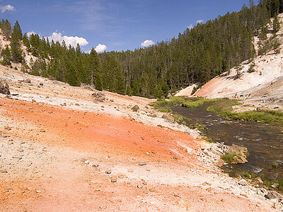 Scenic Whistler Geyser Area - Yellowstone - USA