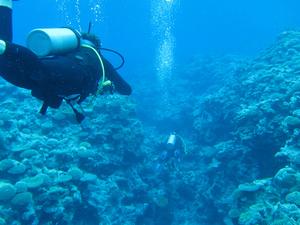Nha Trang Scuba Diving and Visiting 4 Islands Photos
