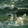 Sea Lions Near Puerto Natales