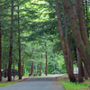 Sizerville State Park
