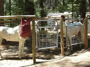 Skillman Horse Campground