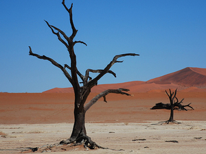 16 Day Johannesburg to Namibia Camping or Lodges Photos