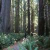 Stout Grove Trails