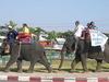 Surin Elephants