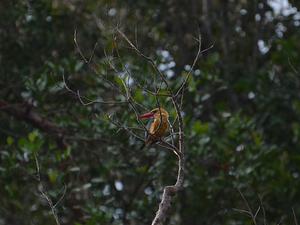 4 Days and 3 Nights Orangutan and Birdwatching Trip (OTB4) Photos