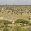Tarangire River In The National Park