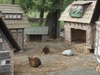 The Rabbit Town