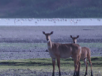 Thol Wildlife Sanctuary