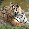 Kanha Best Jungle Plan for 3 Days
