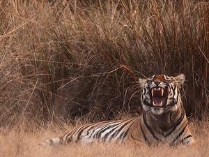 Nirmal Tour - Kanha National Park Jungle Safari Package Photos