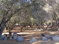 Sequoia Tillie Creek campground