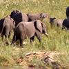 Tourist Attractions In Zakouma National Park