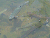 Tonto Creek