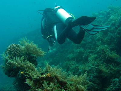 U S A T  Liberty  Wreck  Dive