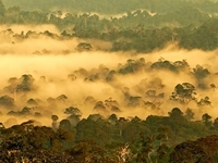 Danum Valley Conservation Area