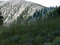Griffith Peak