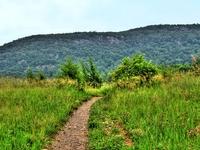 Wawayanda Mountain