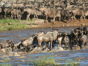 Safari Circuit Northern Tanzania 4 Days Photos