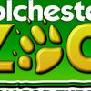 Zoo Logo Medium