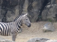 Maryland Zoo