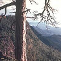Prescott Mingus Mountain