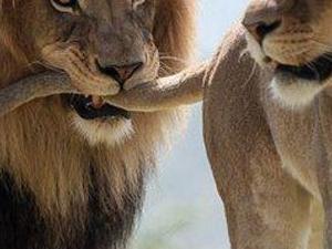 3 Day Wildlife Safari Exploring Queen Elizabeth National Park, Uganda Photos
