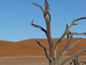 Namib desert tour (full day) Photos