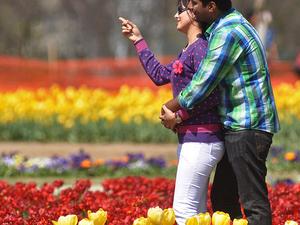 Delight Kashmir - Couple Package Photos