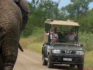 4-Day Budget Kruger Safari Photos