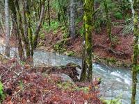Gales Creek