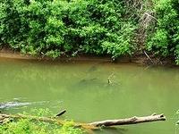 Luckiamute River