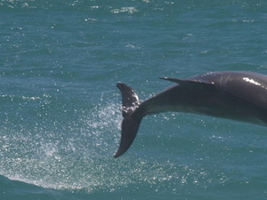 Swim with Dolphins Day Trip from Perth Photos
