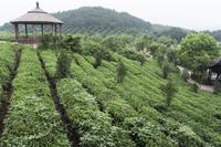 4-Day Hangzhou Private Tour: West Lake and Longjing Tea Plantation Photos